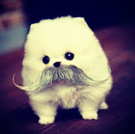 When You Put Fake Facial Hair On A Really Cute Dog You Get This