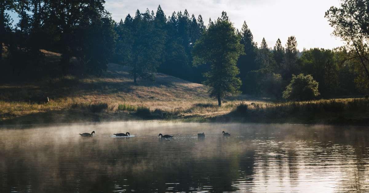 Irish Creek Camp Irish Creek Ranch Ca 321 Hipcamper Reviews And 248 Photos Camping Locations Camping Creek
