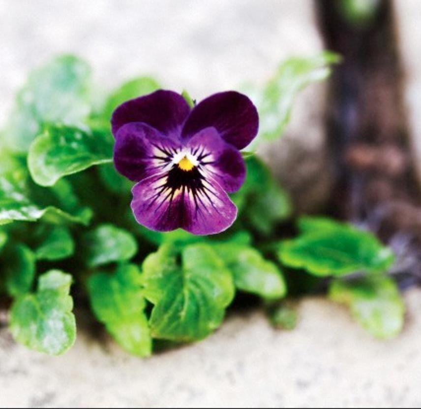 Que faire au jardin en février? | Jardins, Astuce jardin ...
