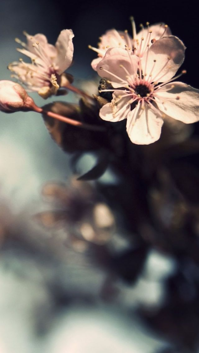 Nature Flowers Pink Bloom Iphone Wallpapers