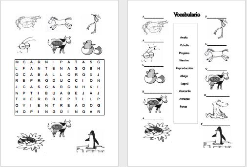 Modelos Didacticos Para Primaria Animales Vertebrados E Vertebrados E Invertebrados Animales Vertebrados Vertebrados