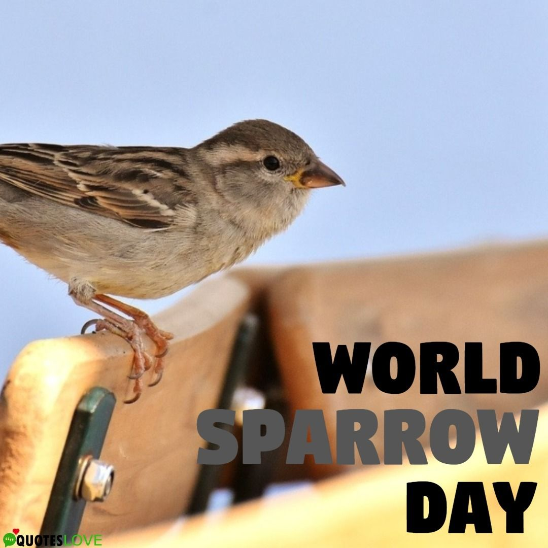 World Sparrow Day Images & Posters in 2020 Pictures