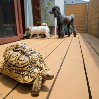 ペットと暮らす 人もペットも幸せにするスタイリッシュな楽園 ペット いぬ 犬