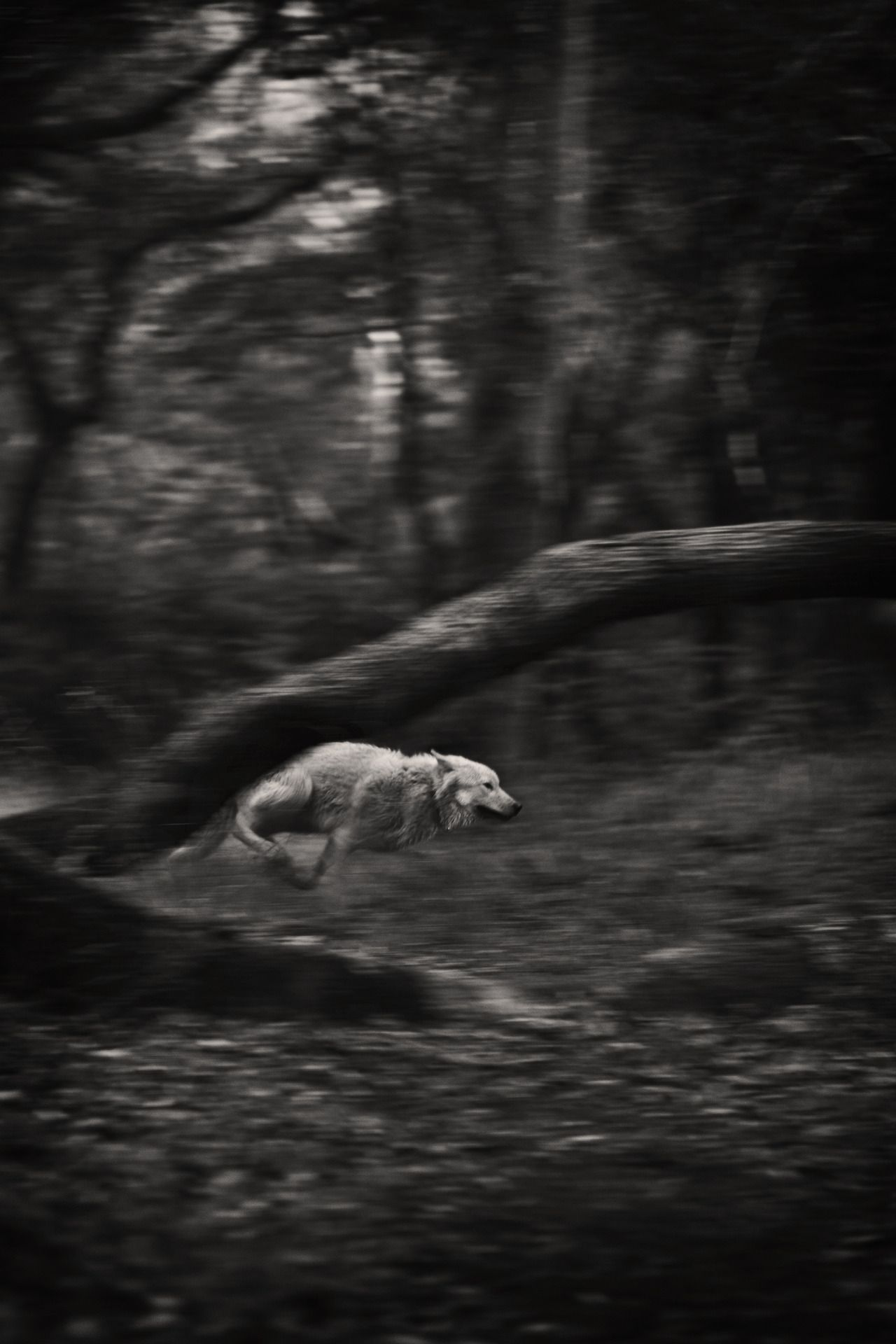 No matter how much you feed the wolf he keeps looking at the forest ilse lehiste