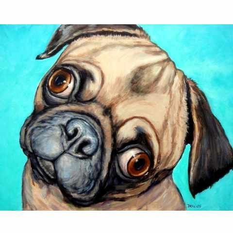 Pug Fish Eyes On Turquoise Dog Art 8x10 Print By Dottie Dracos