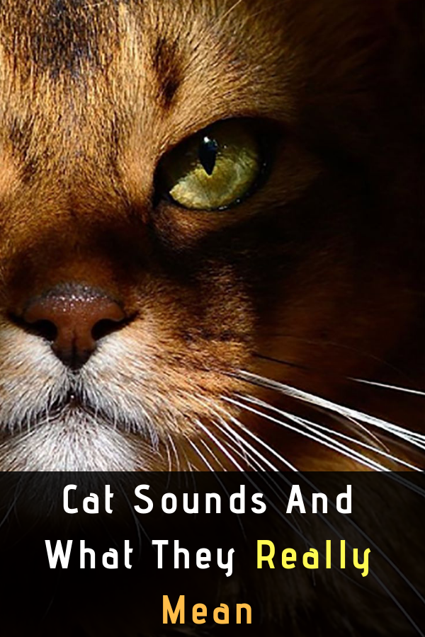 The Weird 6 Cat Sounds Meaning Cats, Mean cat, Low