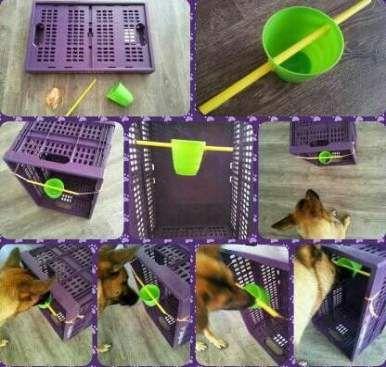 Get Top DIY Dog from remidiy.ivroses.ru