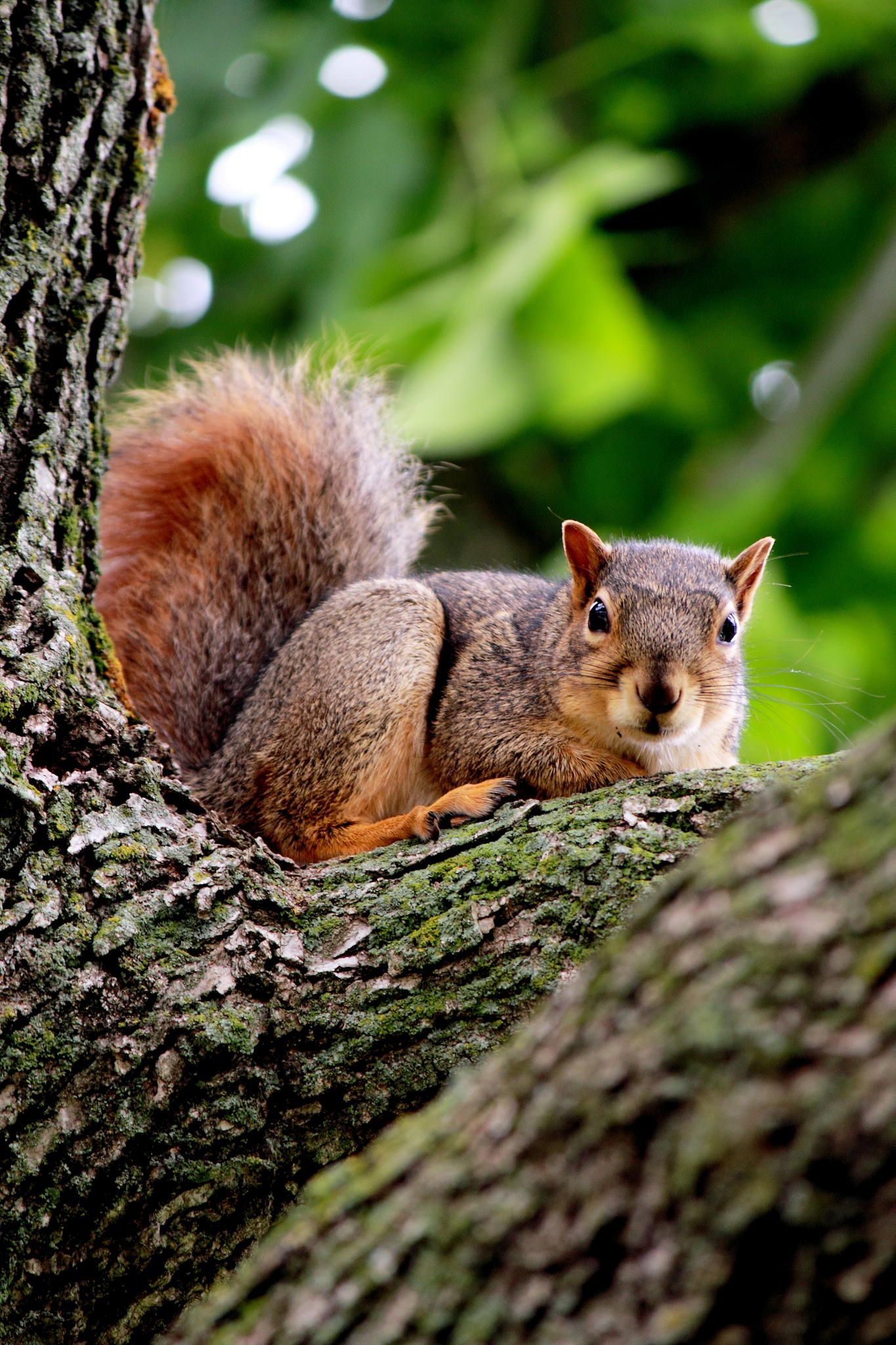 Small Animal Reptiles And Amphibian Habitats: Squirrel .... Don't Come Near Me!