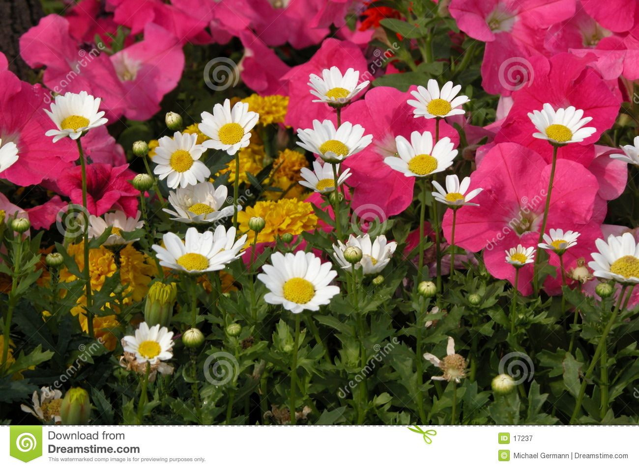 Flower Garden Royalty Free Stock Photography Image 17237