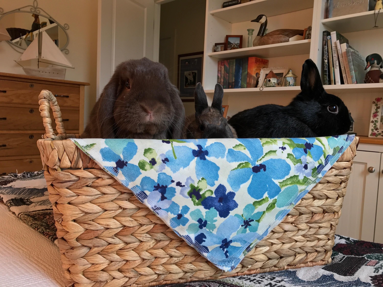 Hoppy Easter everyone! http://ift.tt/2oDwoMA