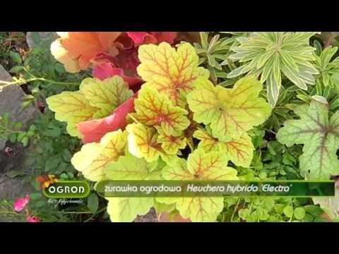 Rośliny ozdobne aż do mrozów - Ogród Bez Tajemnic - YouTube