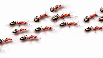 وصفات بسيطة جدا تسمح لكم بإبعاد النمل من المنزل Blog