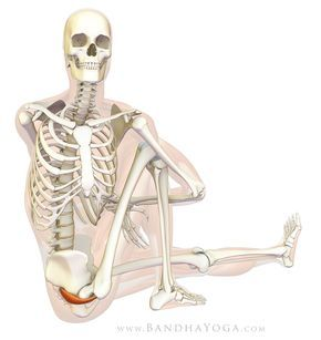 the daily bandha healing with yoga piriformis syndrome