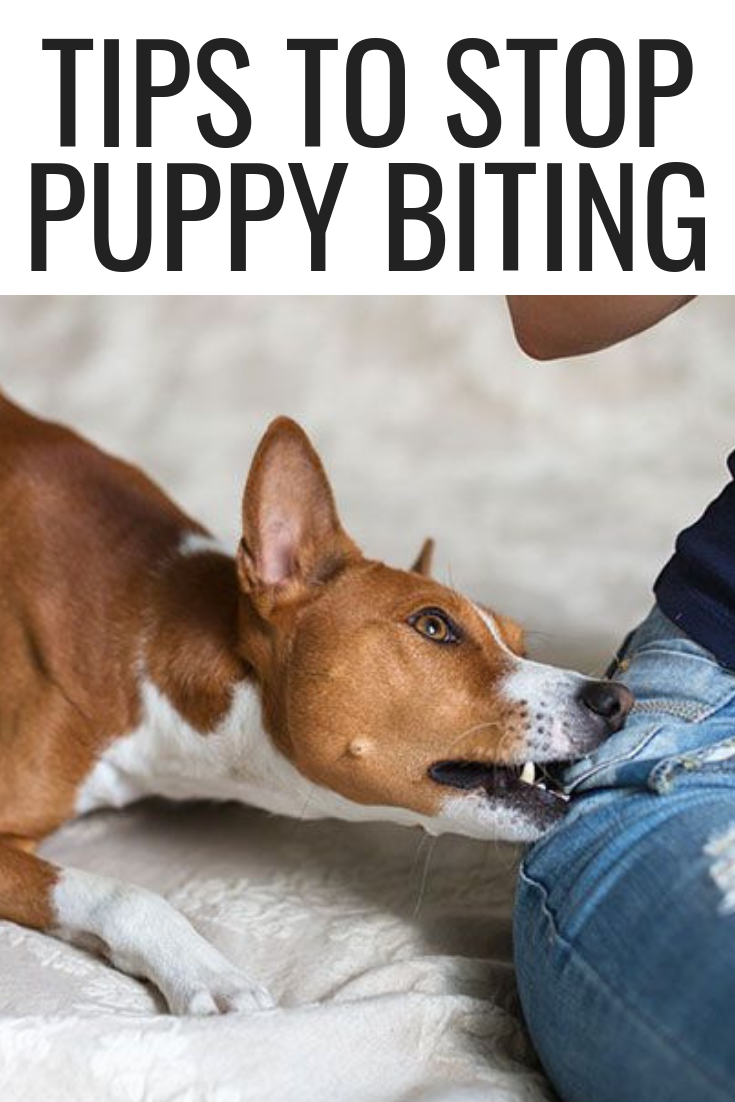 Tips To Stop Puppy Biting Dog Nutrition Dogs Fighting Dog