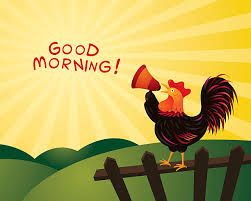 Good Morning Rooster Pics Hd Download Good Morning Cartoon Good Morning Gif Good Morning Images