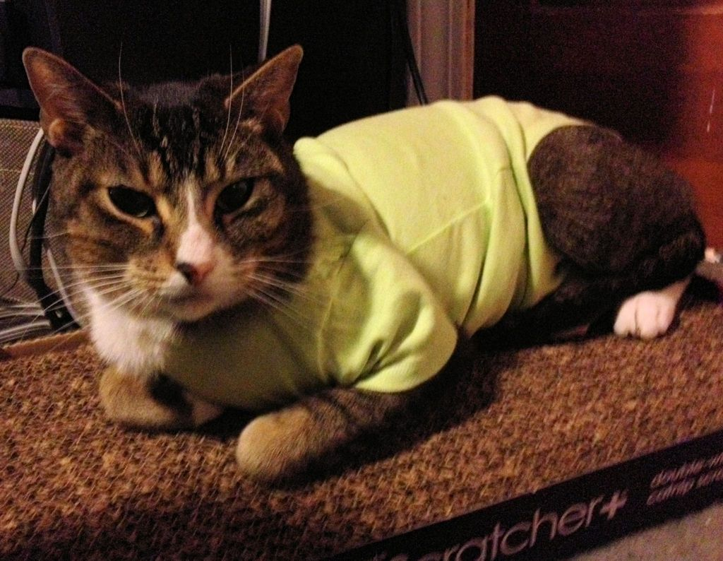Superior Post Surgical Feline Canine Appliance Or Dump The Cone Cat Onesie Cat Neutering Cat Collars