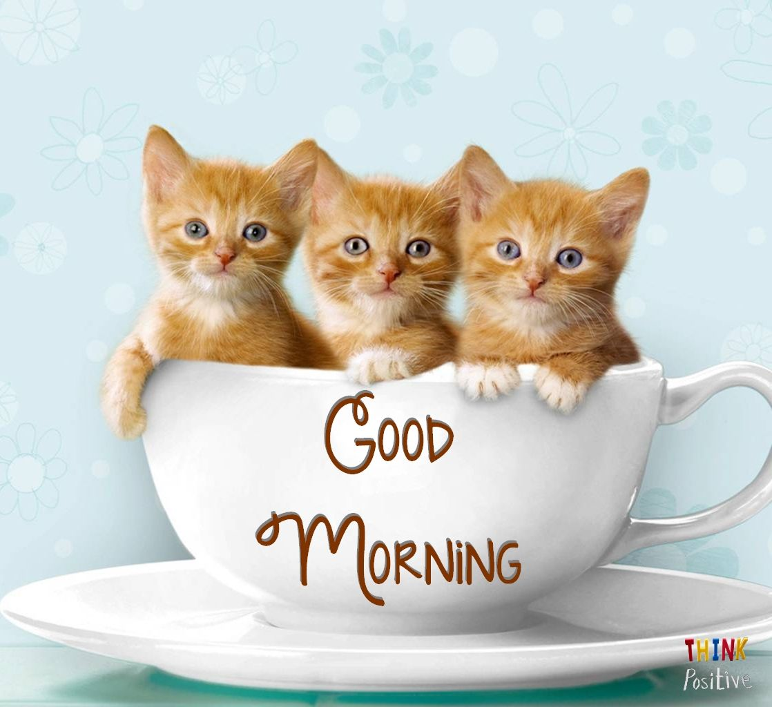 Think Positive Https Www Facebook Com Thinkpositiveyes Teacup Kitten Kitten Wallpaper Kittens