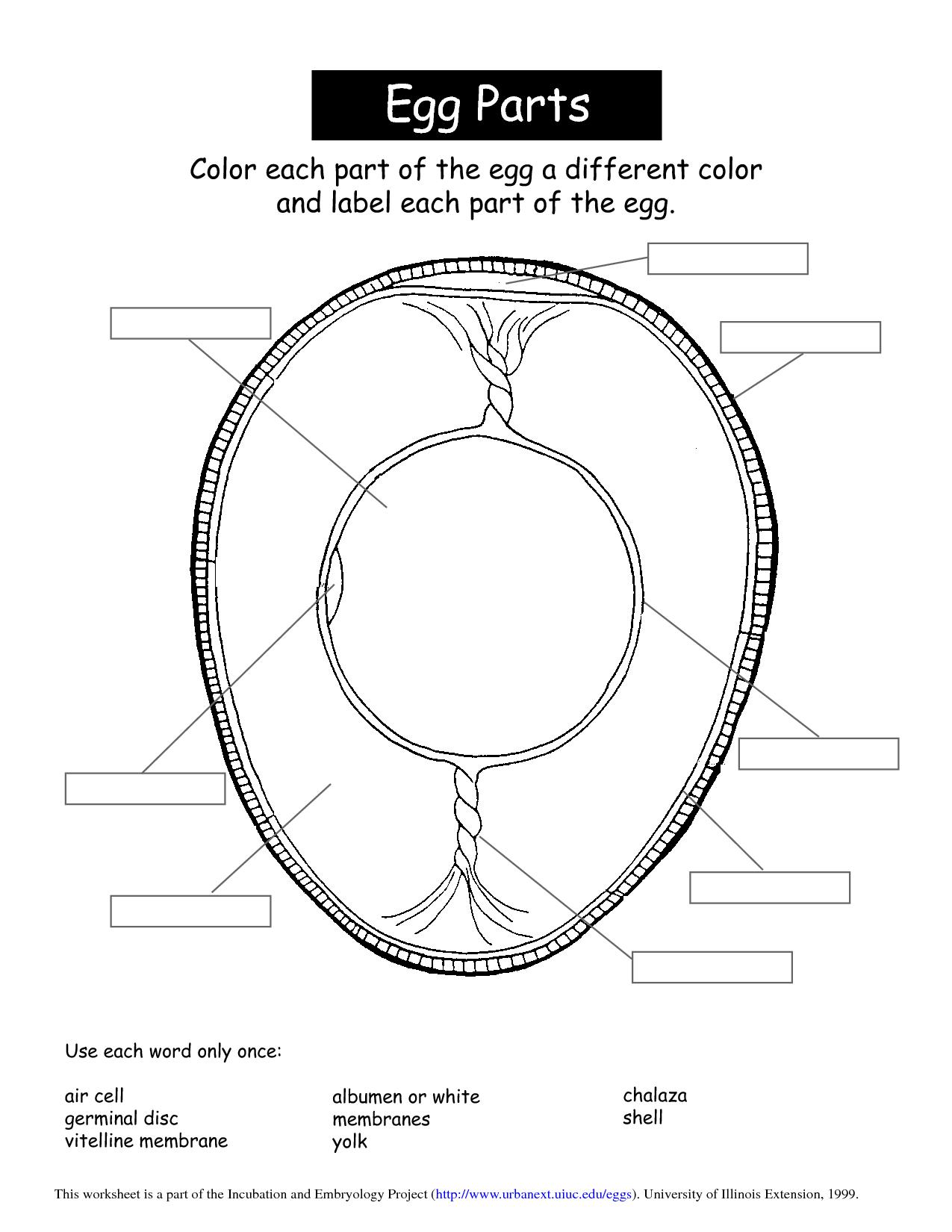 egg lesson … | Ag Class Ideas | Pinterest | Egg, School and Food ...