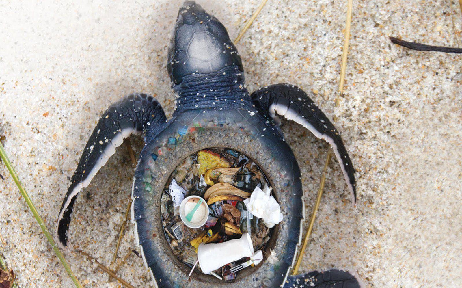 Stunning Images Expose The Horrific Impact Of Plastic Trash On Marine Animals Marine Animals Animals Plastic Pollution