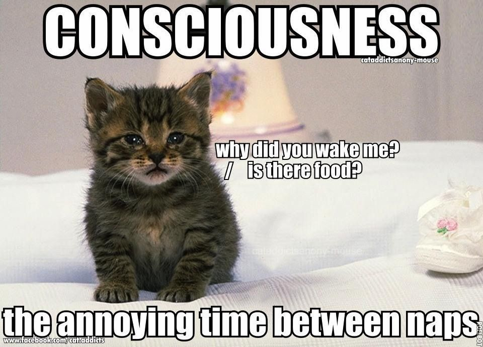 Consciousness the annoying time between naps