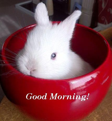 Good Morning 02 06 14 Good Morning Good Morning Images Morning Images