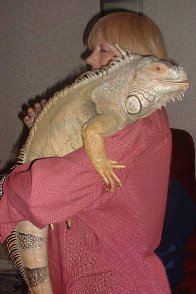 female red iguana