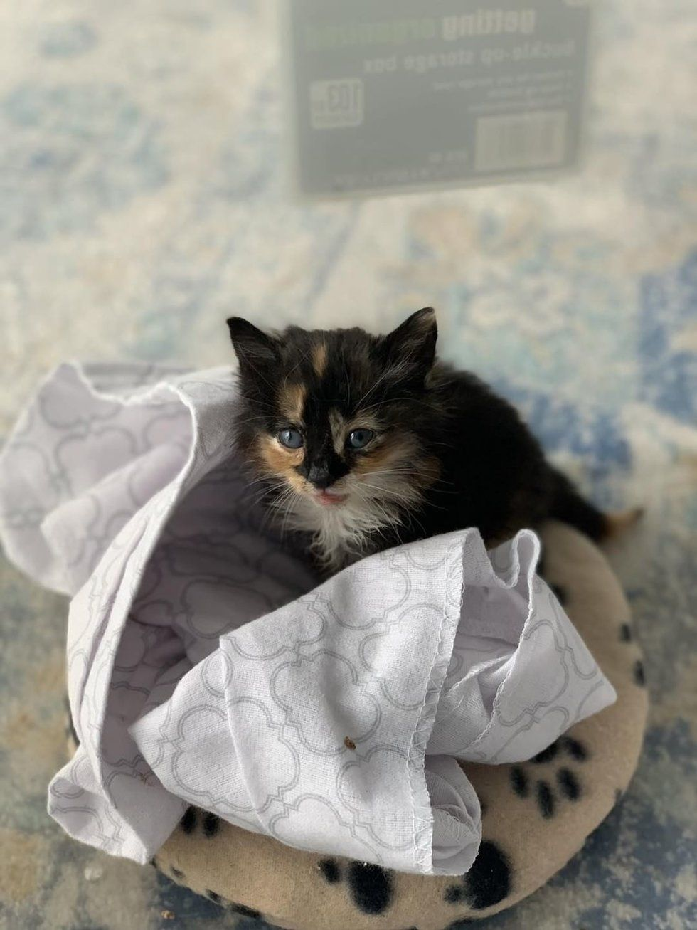 Kitten Who Was Found Crying Alone in Backyard, Finds