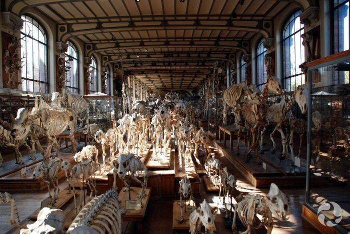 Museum Of Anatomy In Paris Wunderkammer Pinterest Cabinet Of