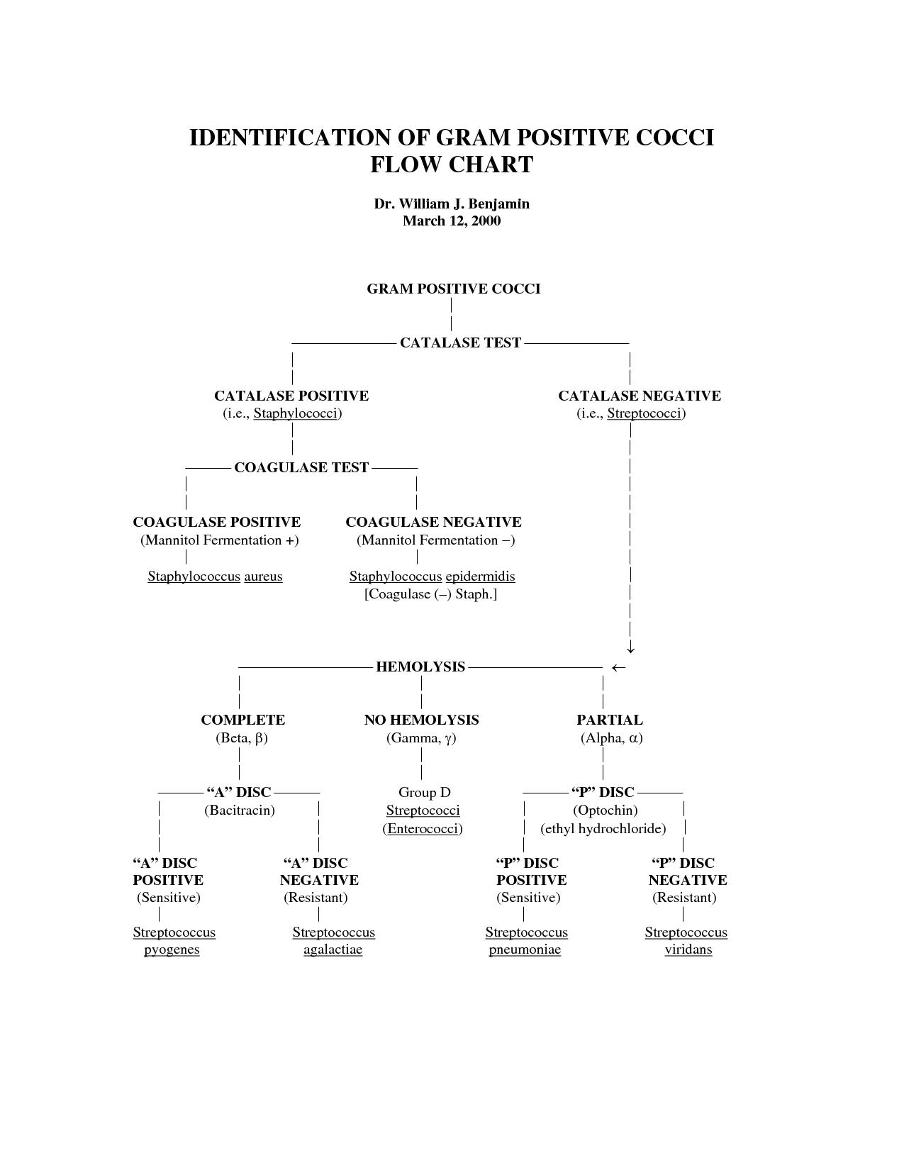 Gram negative bacilli flowchart identification of gram positive gram negative bacilli flowchart identification of gram positive cocci flow chart nvjuhfo Images