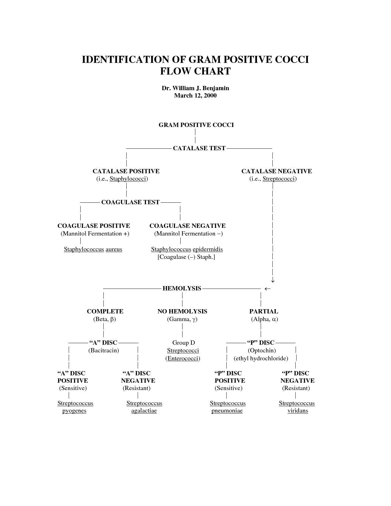 gram negative bacilli flowchart | IDENTIFICATION OF GRAM POSITIVE ...