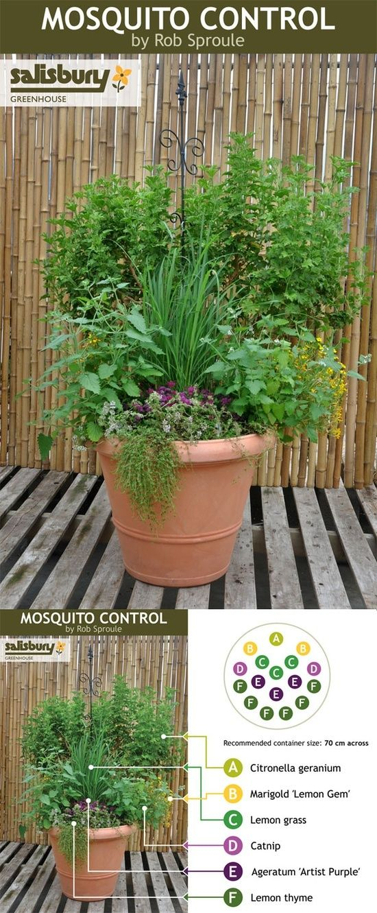 Plant a Mosquito Control container so you can sit and unwind in the evenings without dousing in DEET #diy #garden