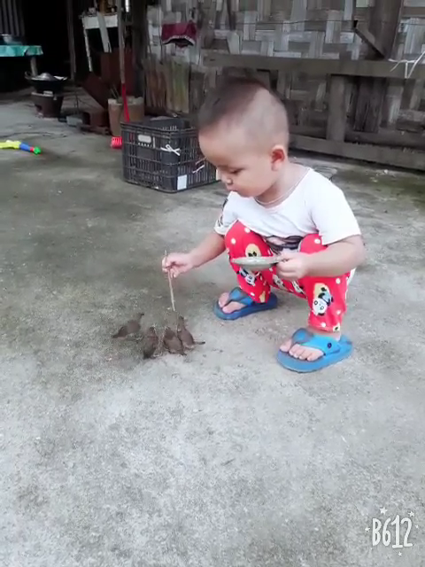 Aww... Just adorable baby and birds. Follow for more cute videos.