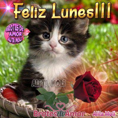 Resultado de imagen para feliz lunes gatitos con glittering y animacion