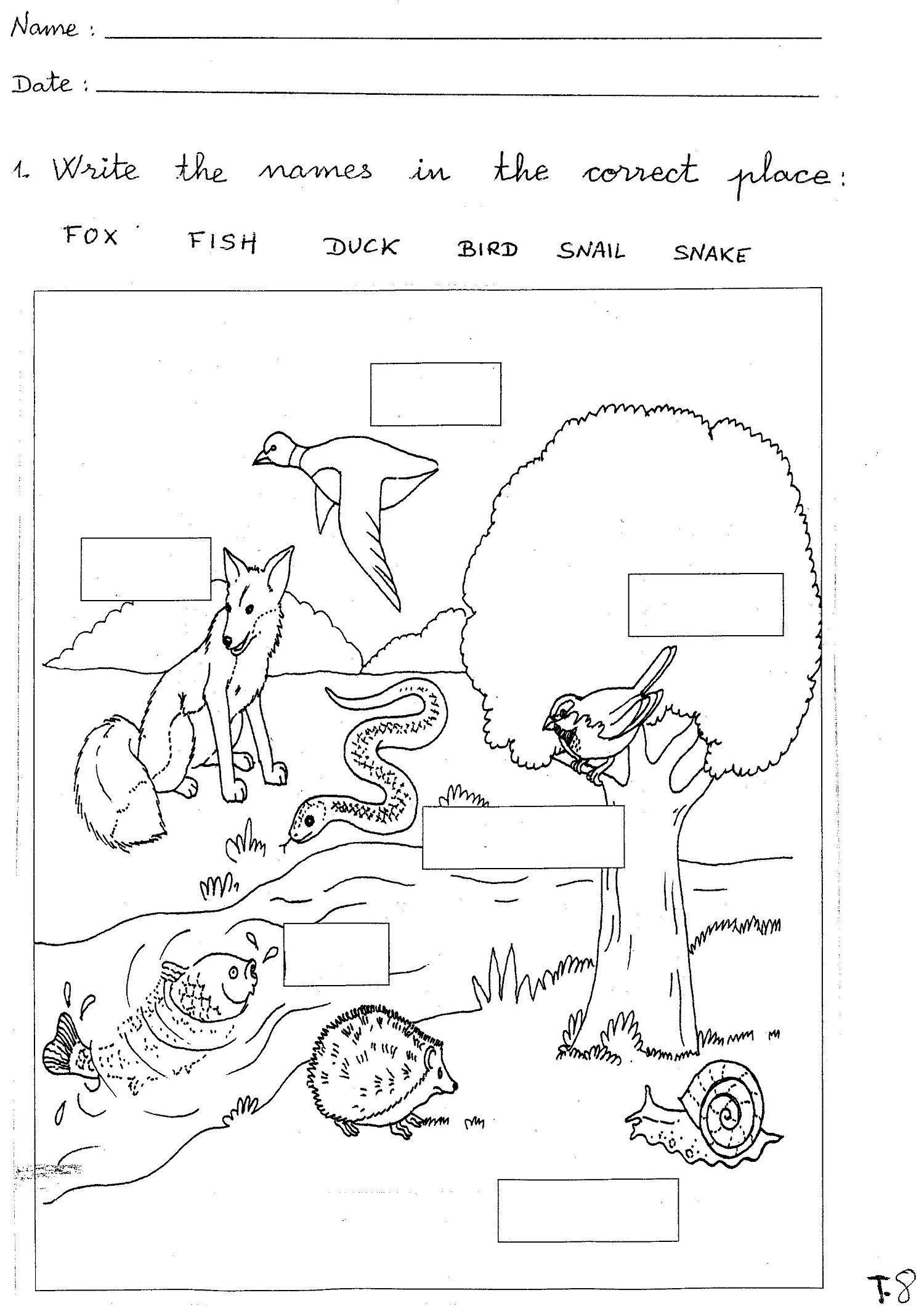 Grade 1 Worksheets for Children Learning Exercise   Biology worksheet [ 2120 x 1500 Pixel ]