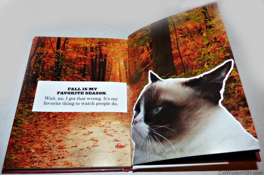 Grumpy Cat Book & Note Cards Giveaway & GrumpytownUSA