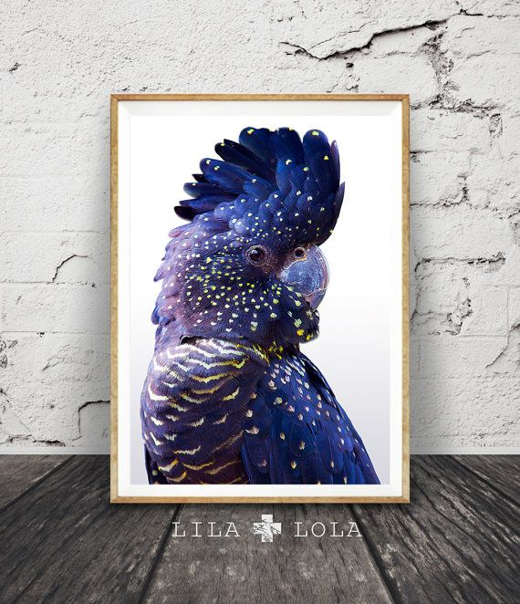Navy Blue Wall Art black cockatoo print, large wall art, contemporary prints