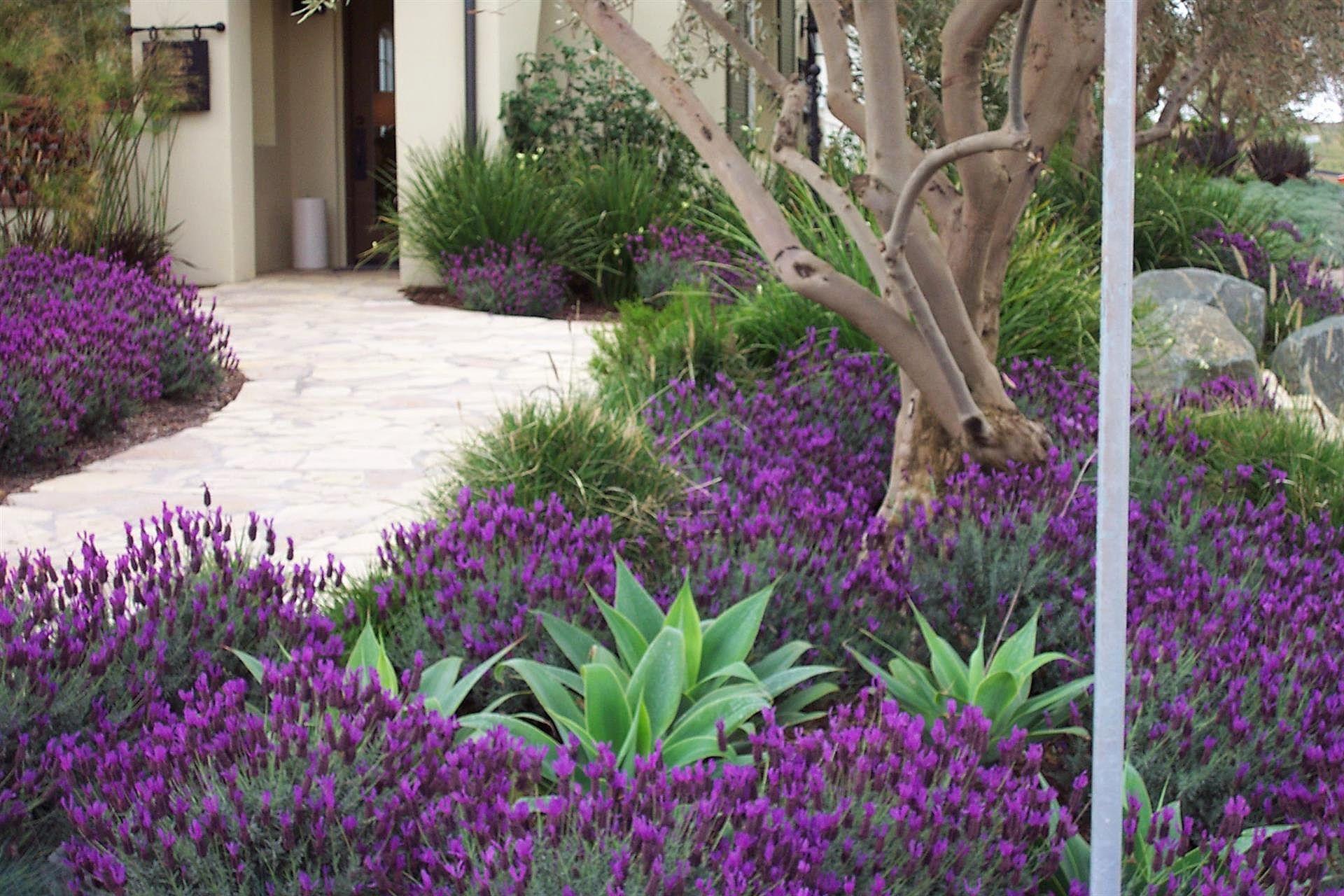 Torrey Pines Landscape Company Drought Tolerant Landscaping