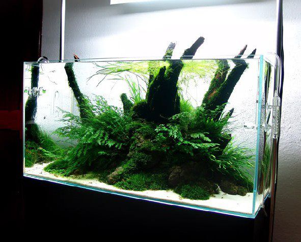 Get Excited And Make Something Aquarium Landscape Aquascape Aquarium Freshwater Aquarium Plants