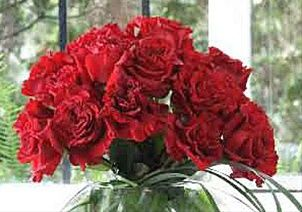 Wanted - Rose de jardin - Roses - Fleurs par catégorie | Sierra Flower Finder