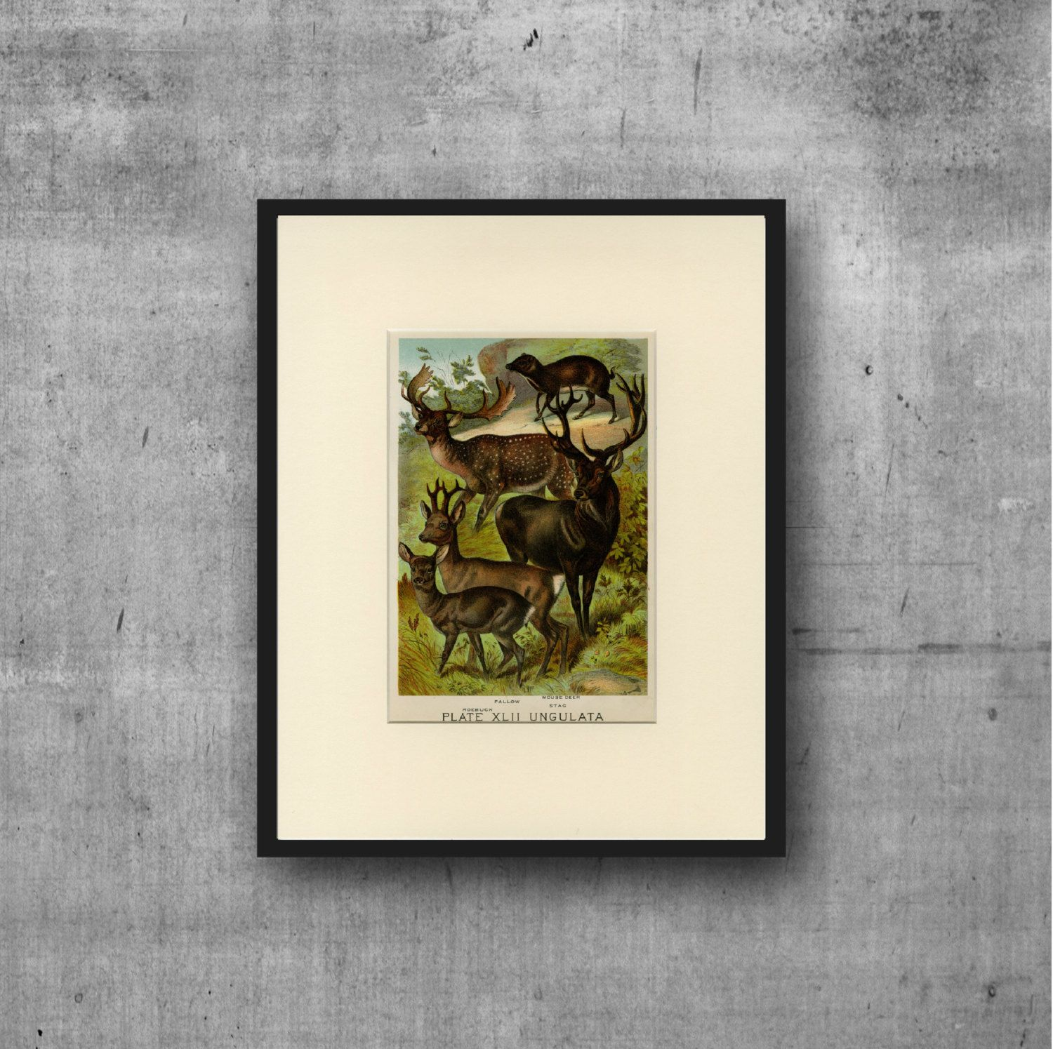 Vintage Deer Art Print C. 1880 - Antique Lithograph - Matted 11x14 - Wall Art, Home Decor, Gift Idea - Natural History, Buck, Stag, Hunt by…