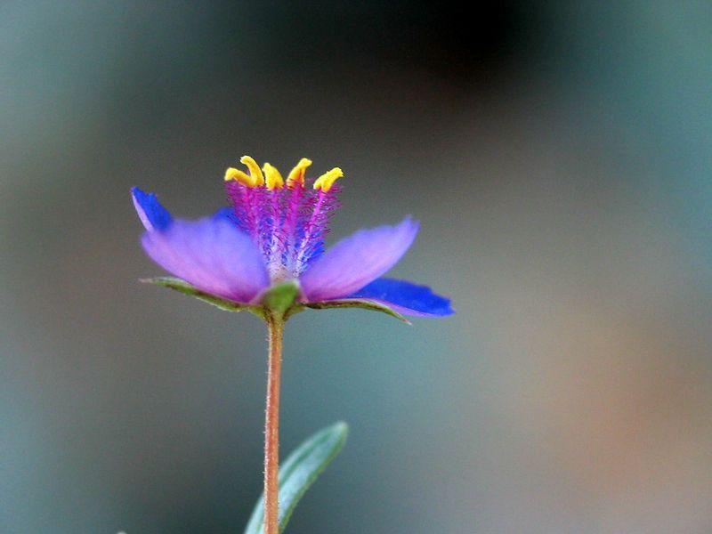 Pin På Flores Y Jardines