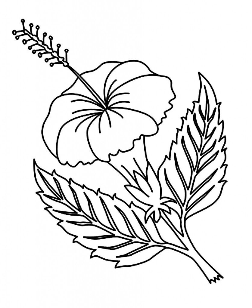 free printable hibiscus coloring pages for kids coloring pages