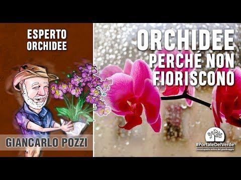 orchidee e cannella