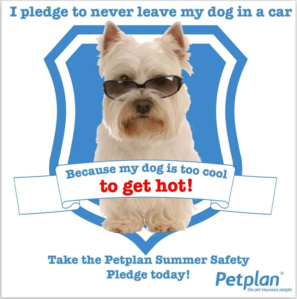 Take The Petplan Pet Insurance Summer Safety Pledge And Help Us