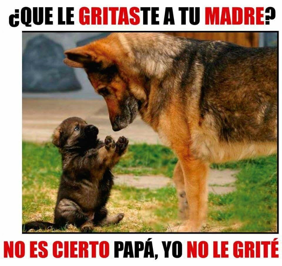 A Quien Le Gritas Memes Perros Perros Mascotas