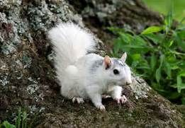 see more amazing albino animals here 21 amazing albino animals,  #Albino #albinoanimalbaby #A... #albinoanimals