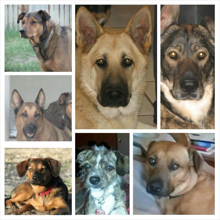 Haskins canine family photo.