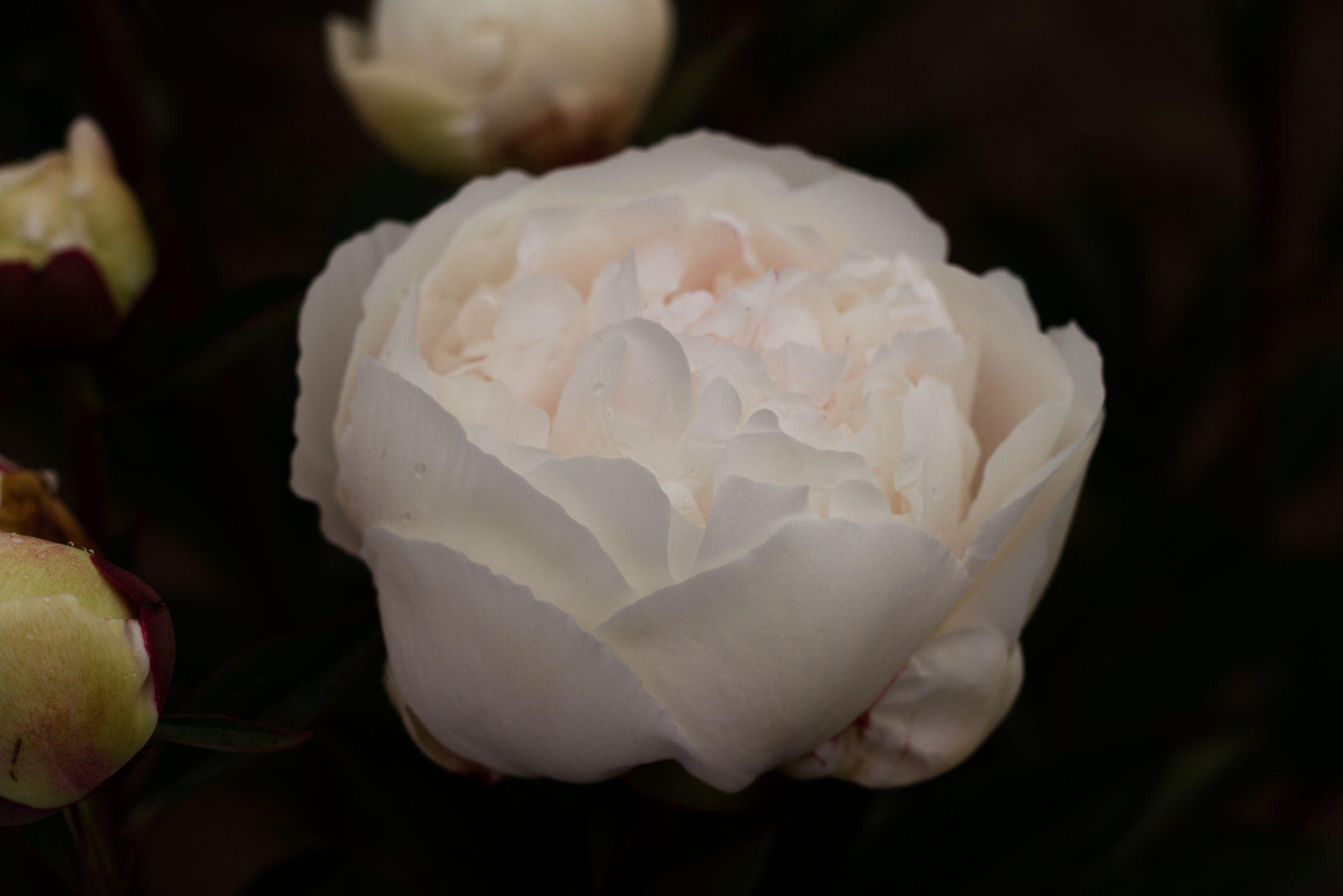 Park Art|My WordPress Blog_Wholesale Sugar Flowers Discount Code