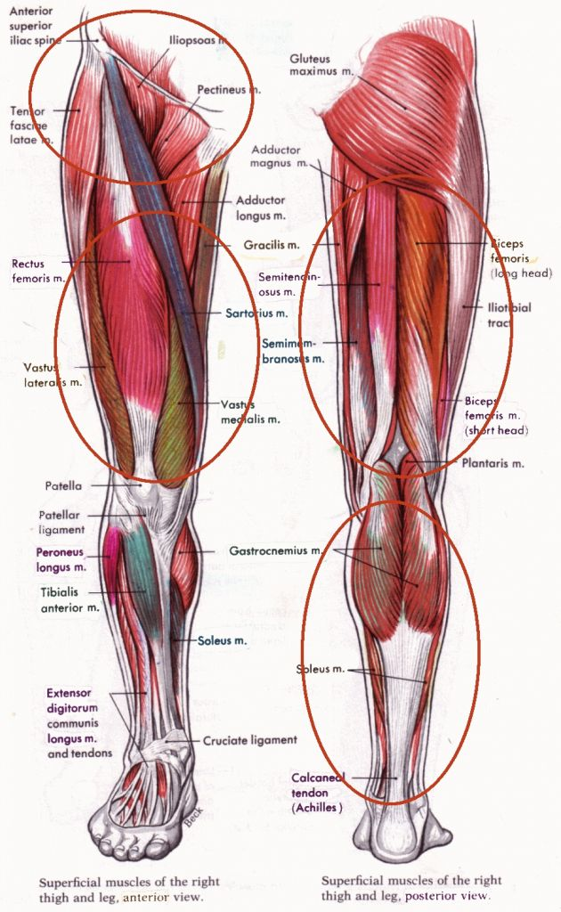 Paraspinal Muscles Anatomy Human Muscles Archives Page 31 Of 53 ...