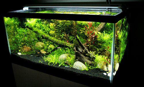 Finnex Fugeray Aquarium Led Light Plus Moonlights 10 Inch Planted Aquarium Aquarium Aquarium Lighting